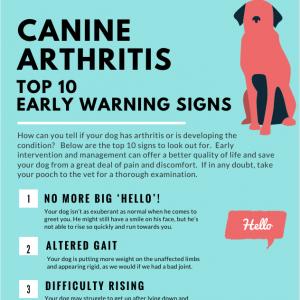 arthritis symptoms in dogs durere la genunchi după